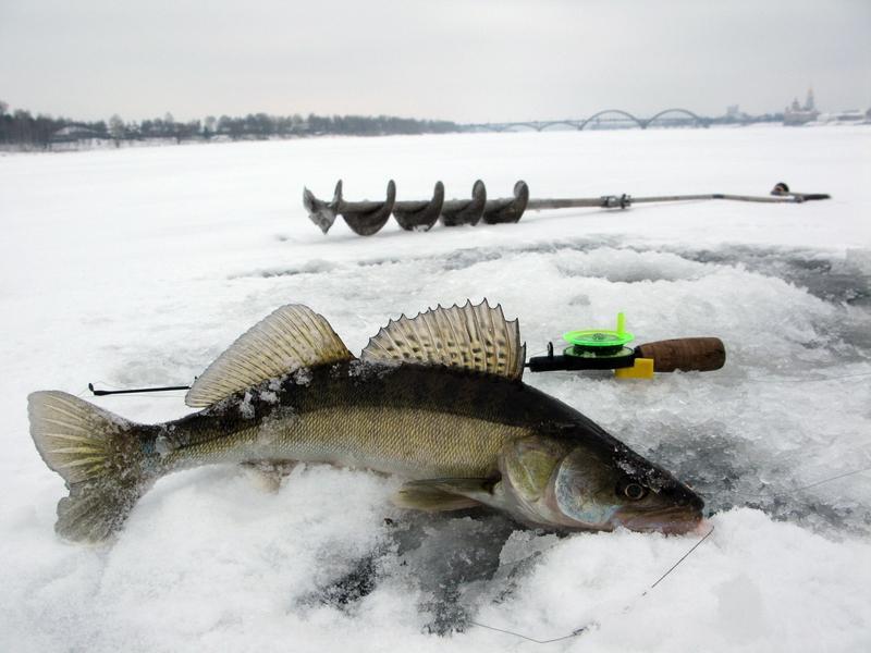 калязин платная рыбалка