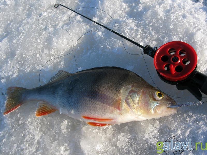 блесны для рыбинского окуня