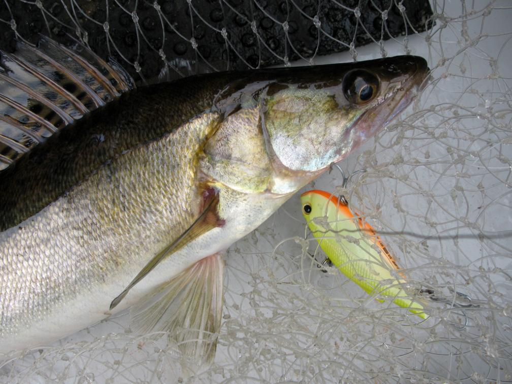 Ратлин на судака. Весенняя рыбалка на Рыбинском водохранилище