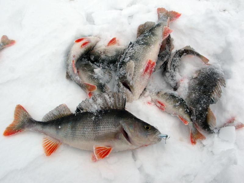 рыбалка на море на окуня