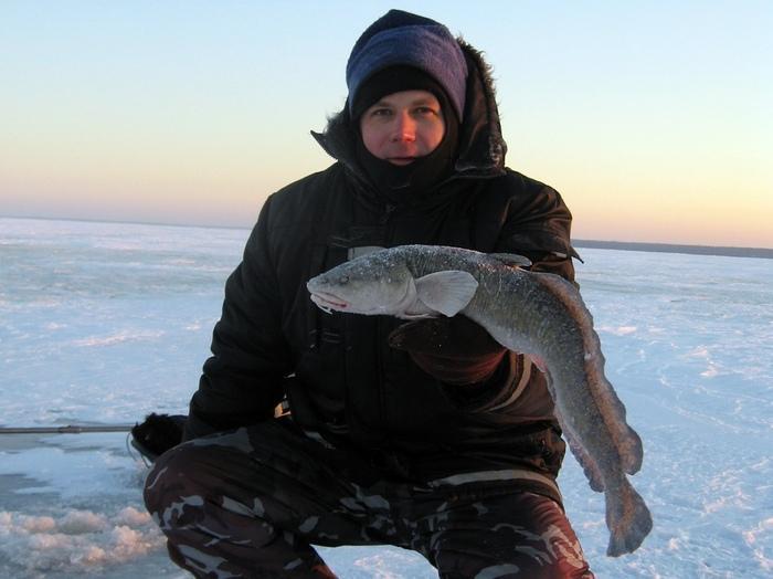 рыбалка на налима рыбинск
