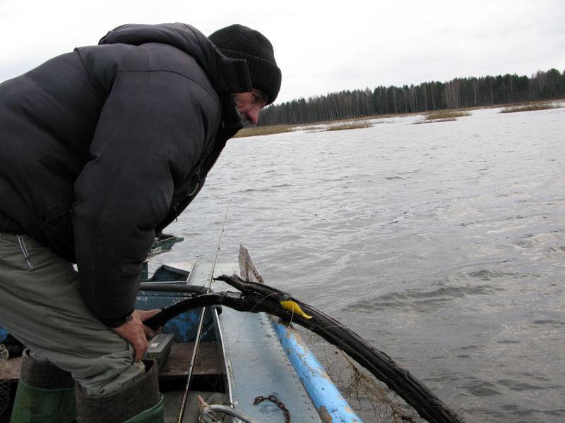 ловится ли щука в мороз