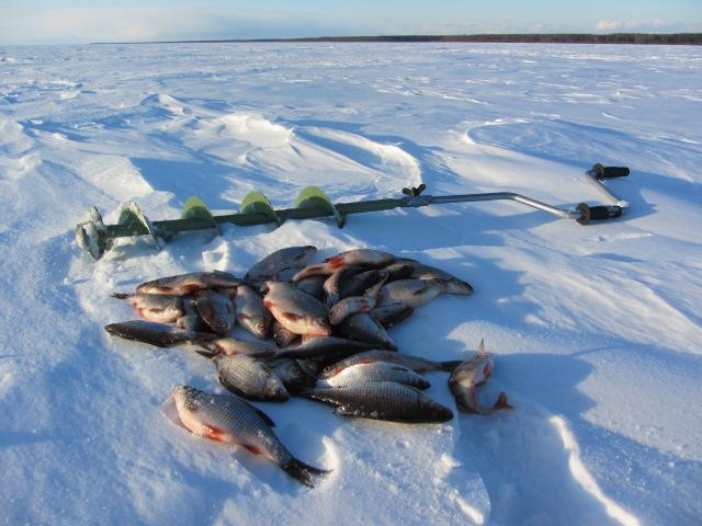 клев плотвы в рыбинске
